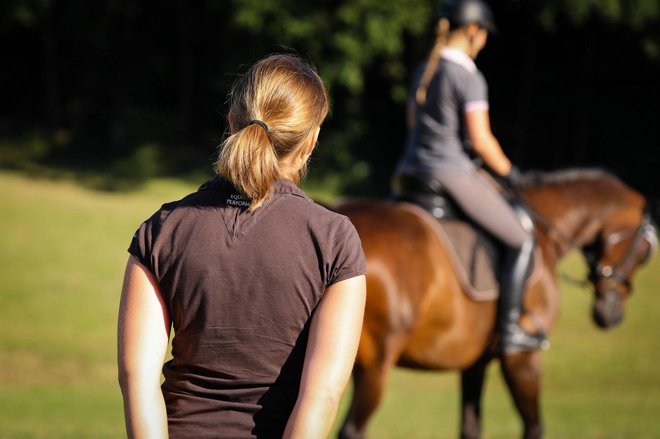 Training von Pferd & Reiter vor Ort